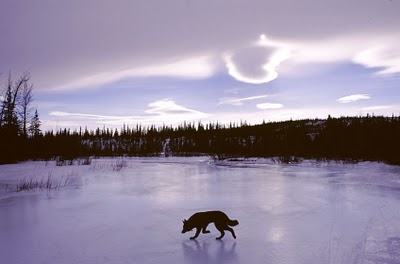 A dog on the frozen pond.