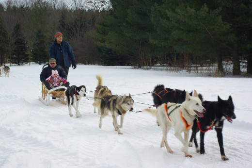 Believe it or not, a dogsled can also be a good way to observe wildlife, especially if being run in the wilderness.