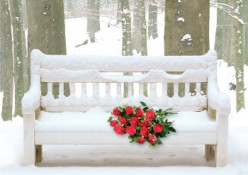 Winter Rose (an occasion poem)