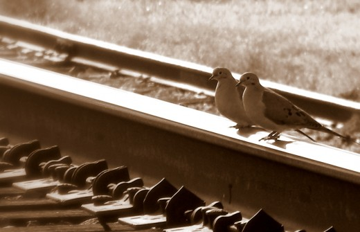 Two doves waiting on a train. In Midland, Louisiana.