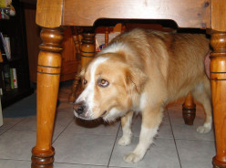 Dog language : Calming signals