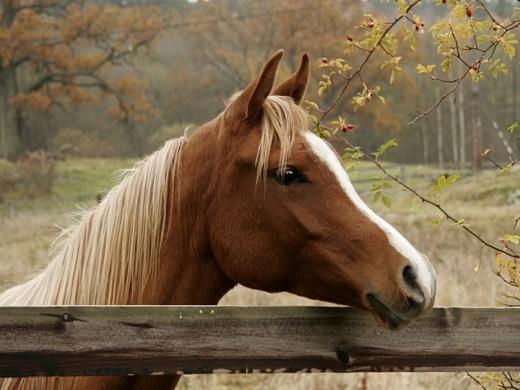 A cute horse: Find the perfect equestrian gift
