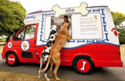 There's also treat trucks for our four footed friends