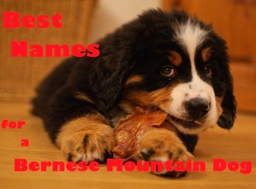 Shy Girl Dog Names