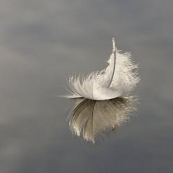 Hope Rises:  A Poem