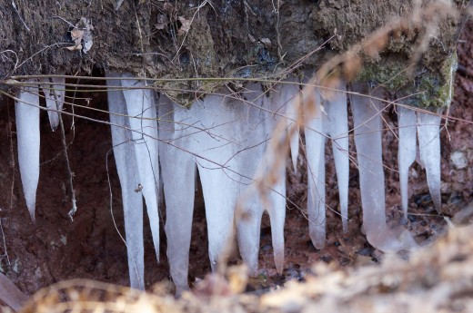 Ice Formation under Dirt Ledge