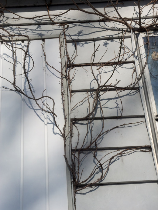 The years pass and the vines grow far along the walls before falling into sleep once more.