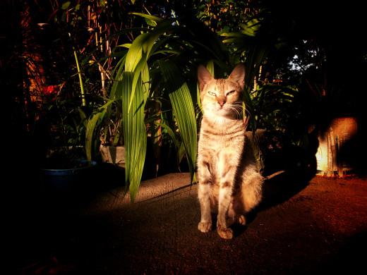 The Resident Feline. Samsung Galaxy S2.