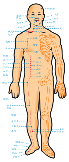 """A schematic view of the """"Stomach meridian"""" - one of the 14 known energy meridians in the human body."""