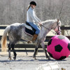 equestrianna profile image