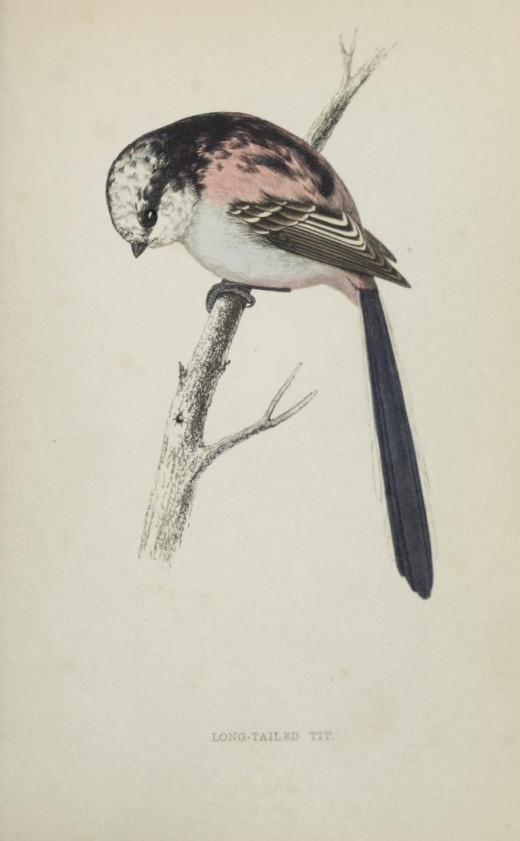 History of Birds Rev Morrison { 1800's}
