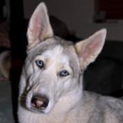 HuskyChaos profile image