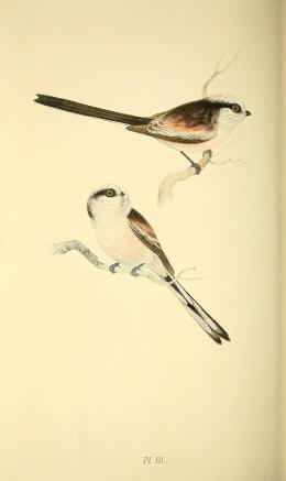 Meyer-Coloured Illustrations of British Birds