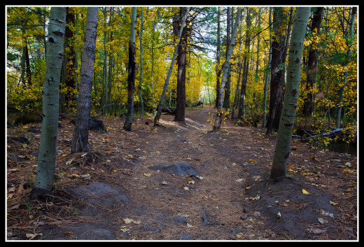 The trail in early fall