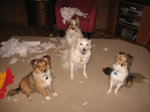 Bad dogs!!
