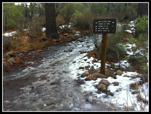 The Dry Pond trail as it intersects the Middle Thomas Creek trail.
