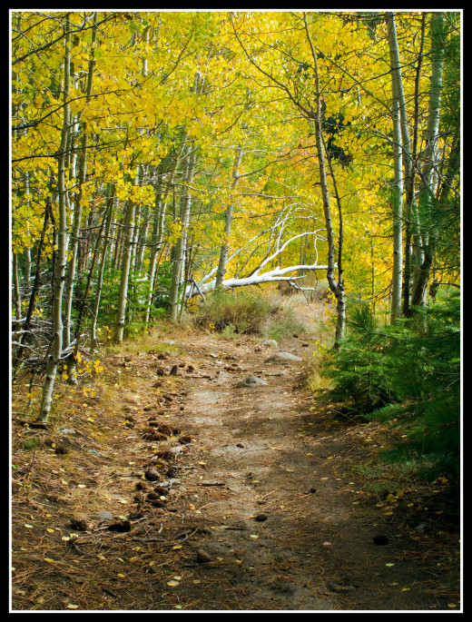 Early autumn along the trail