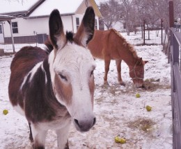 Here are Ray (foreground) and Rojo on a snowy day in early December. Rojo is the perfect companion for Ray and vice versa!
