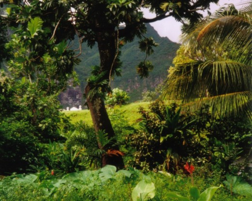 You begin your trek, headed for the vast rain forest that looms in the distance.