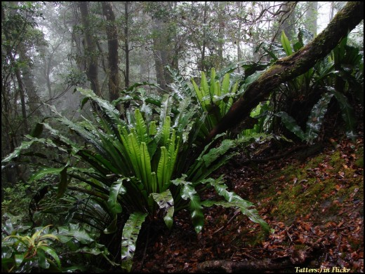 As the elevation increases, the vegetation changes. Sparse woodland gives way to a misty cloud forest. You are thrilled. Observing nature is one of the greatest and oldest pleasures mankind has known!