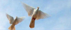 If we were doves