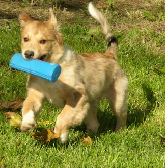 Catch me if you can! Does your dog play the keep away game?