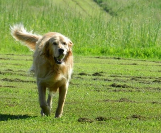 Fetch should be fun and rewarding!