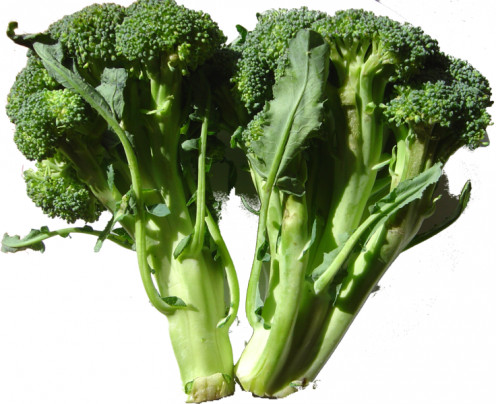 A couple of broccoli spears cut fresh from the plant to be used in cooking a cukinary dish.