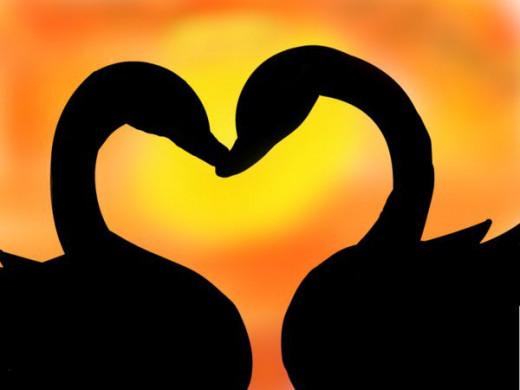 Amor-Love