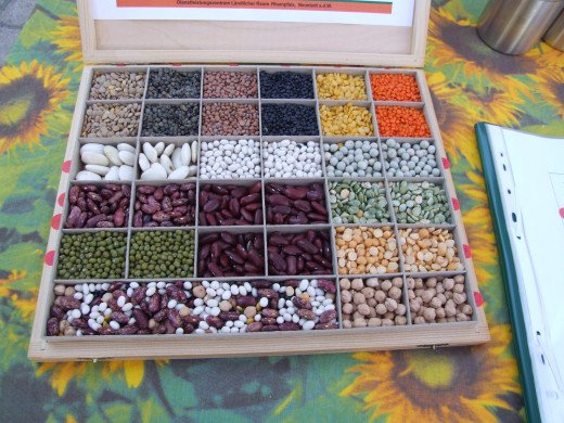 Legumes provide a valuable source of plant based protein.
