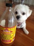 Top Benefits of Apple Cider Vinegar for Dogs!