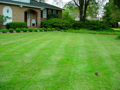 A perfect lawn