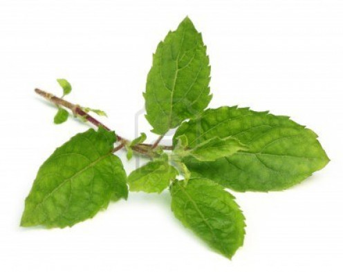 Tulsi cures many skin ailments apart from cough and cold in children.