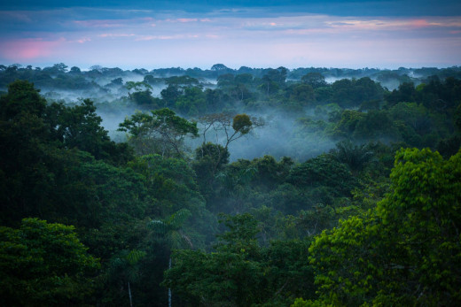 A View Of The Amazon Rainforest
