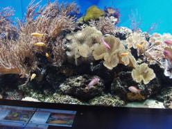 7 Tips For Designing An Aquarium