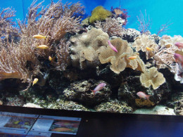 Aquarium resembling a coral reef at the London Zoo. The most beautiful aquariums resemble a single habitat.