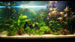 An aquarium with a triangular shape.
