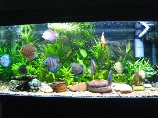 An aquarium with a concave shape.