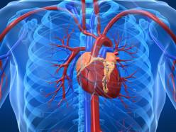 Diseases Of The Myocardium II: Cardiomyopathy