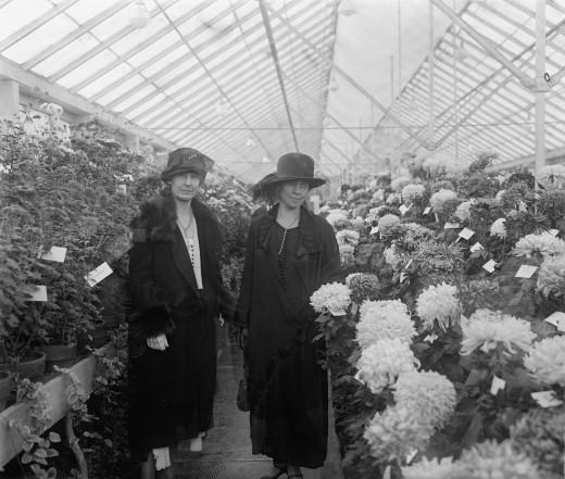 Chrysanthemum Show, 1925