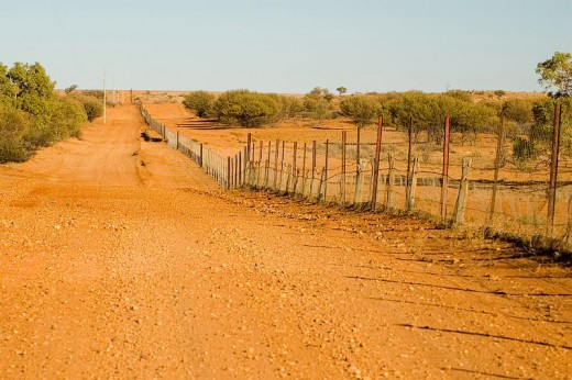 A View Of The Dingo Fence.