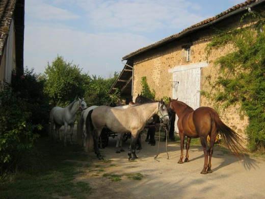 Horses at Les Trois Chenes B&B in 2013. These guests arrived on horseback and in caleshes (horse-drawn carriages / carts)