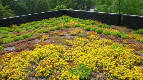 There are many types of green roofs. Some contain more bushes and plants than grass, like the picture above.