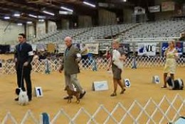 A typical AKC Conformation Event