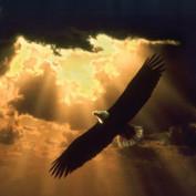 faith_love_hope32 profile image