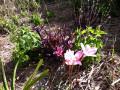 My Garden of Delight - a Poem of Floral Desires
