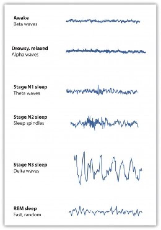 As sleep deepens neurons synchronize their impulses and produce high amplitude theta and delta waves