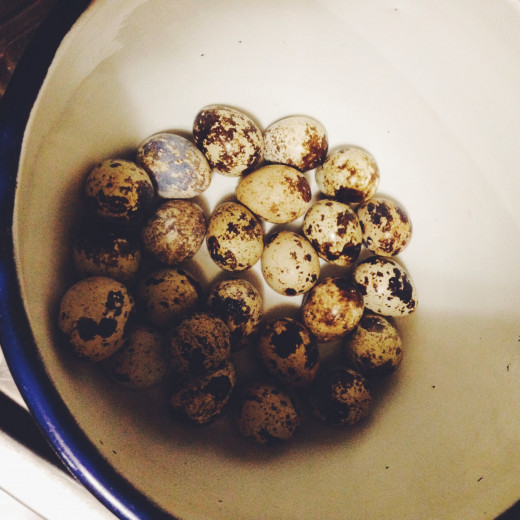Prepare quail eggs