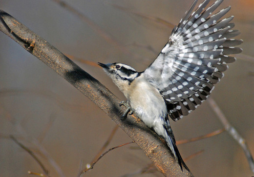 The flash of movement from a bird taking off or landing is often your best way to detect them