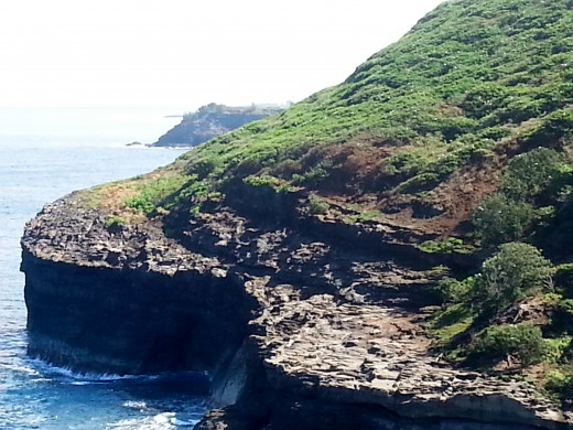 Nesting site for Red Footed Boobies on the cliffs across from Kilauea Lighthouse